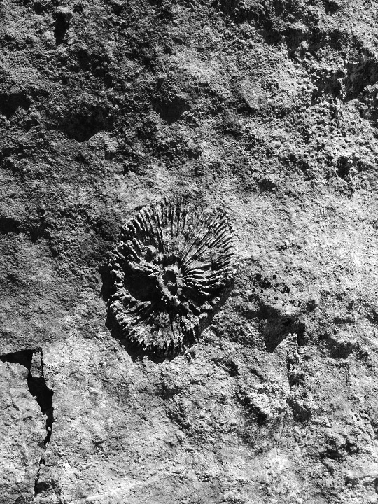 A fossil in the limestone
