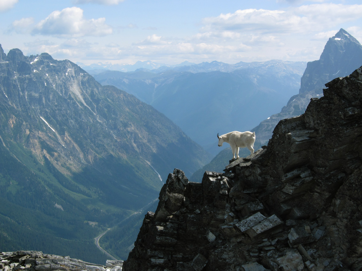 09_mountain_goat